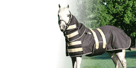 Waterproof Turnout Blankets & Sheets