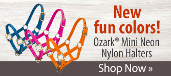 Stock up on these fun durable, adjustable halters especially for minis. Shop Now