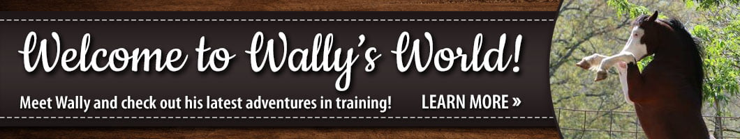 Welcome to Wally�s World!