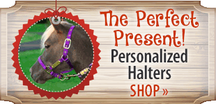 Personalized Halters! Shop Now