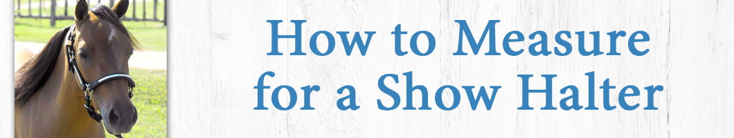 How to Measure for a Show Halter