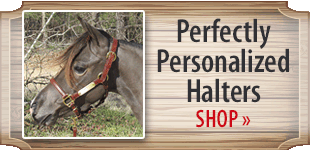 Perfectly Personalized Halters! Shop Now